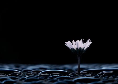 flower in darkness